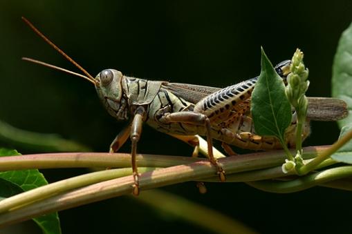 ahgrasshopper.jpg