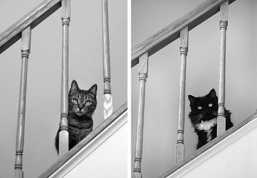 jasper-zena-stairs.jpg