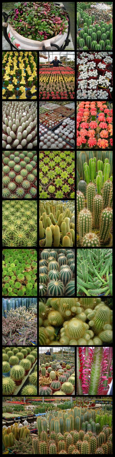 kactuskorral.jpg