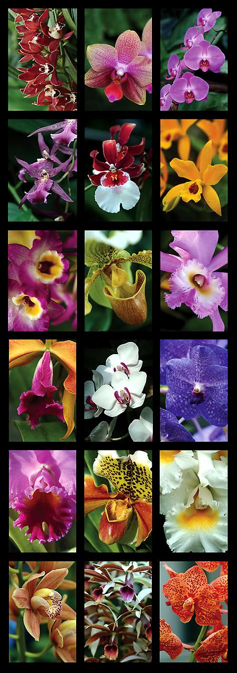botorchids.jpg