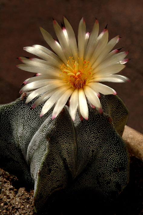 cactus-in-bloom.jpg