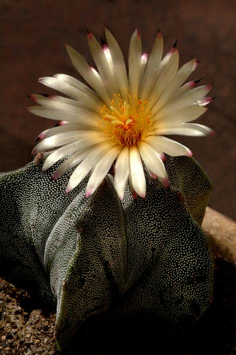cactus-in-bloom.jpg