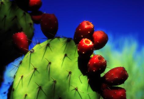 cactuswildcolor.jpg