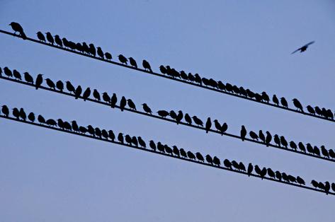 westheimer-birds