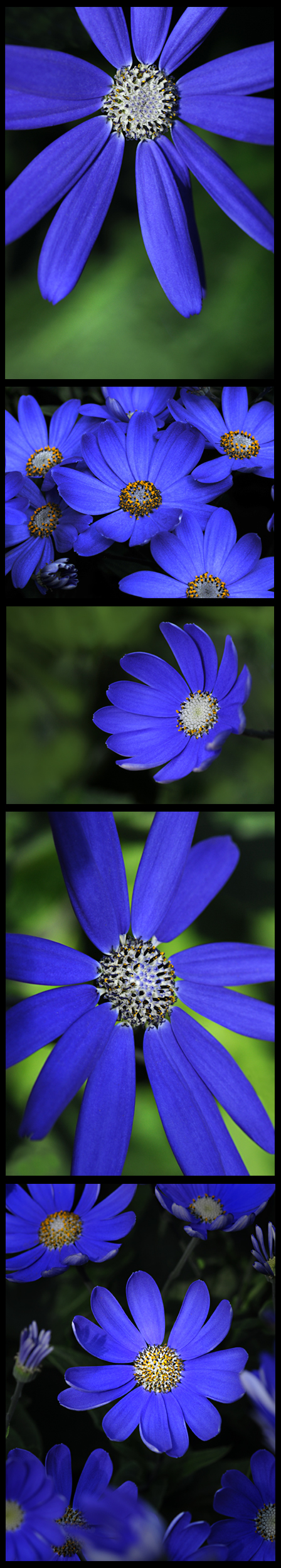 bluerthanblueredux1