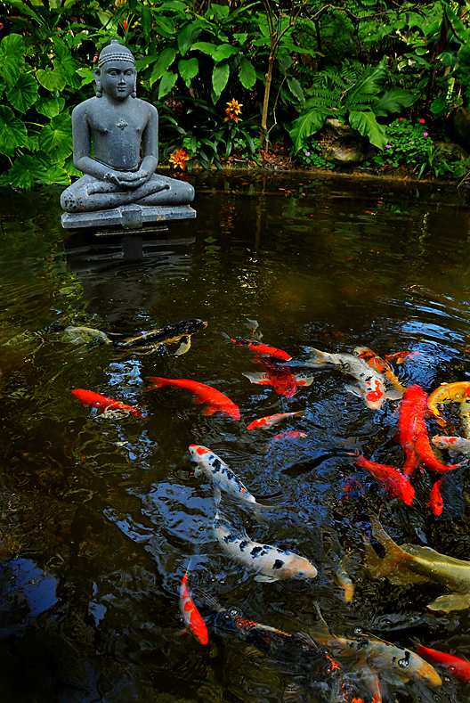 Angela maria isaza garden muse for Backyard koi fish pond