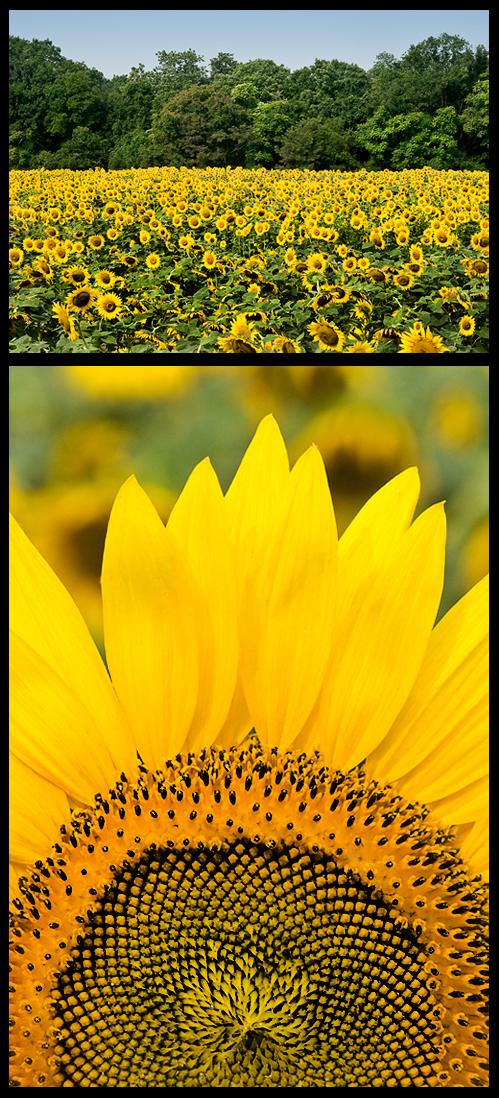 Aztec Flower Song Cindy Dyers Blog