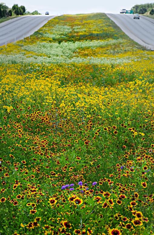 TexasHighwaysWildflowers lorez
