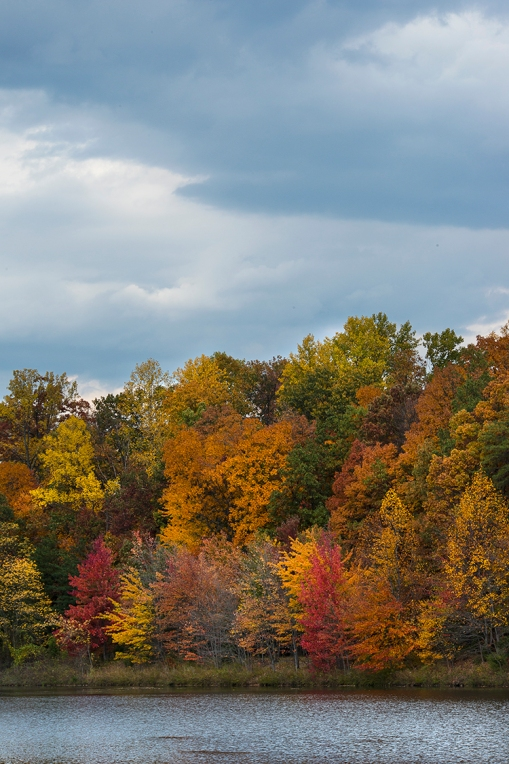 Kingstowne Lake Foliage