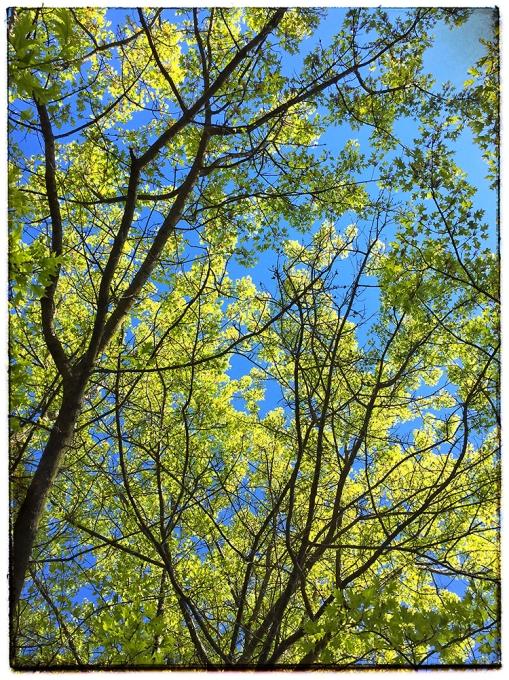 Spring Trees lorez