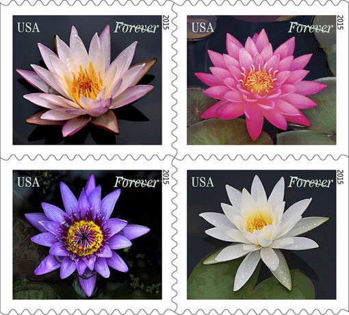 Water Lily Stamps lorez