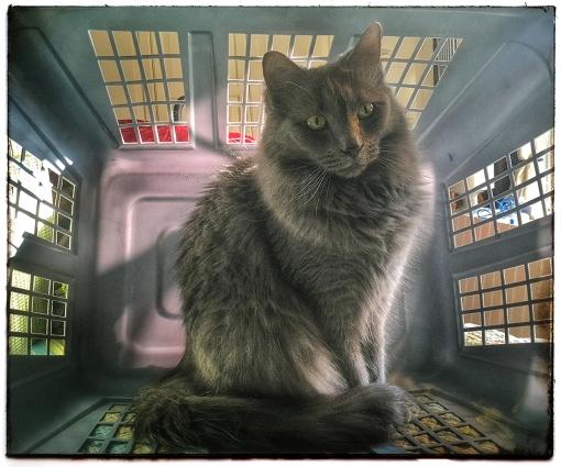 Lobo Prison WEB