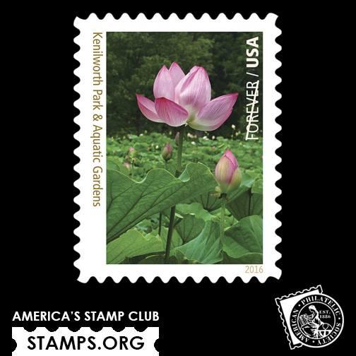 Lotus Stamp