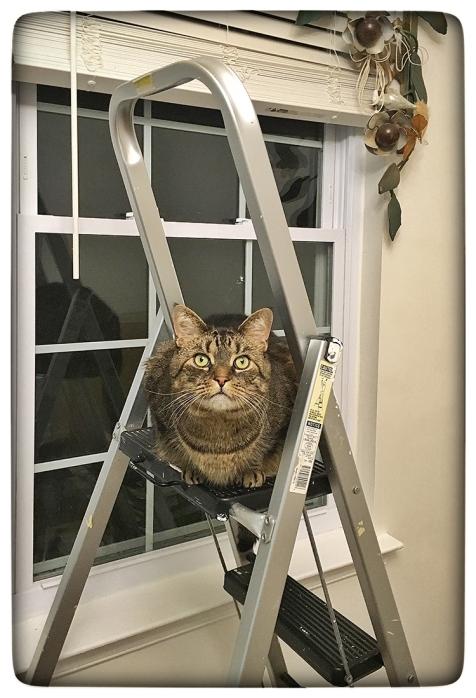 Pixel Ladder WEB