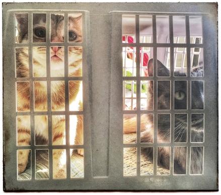 Prison Cats WEB