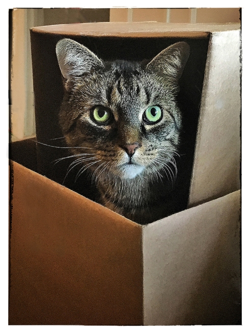 Pixel in Box lorez