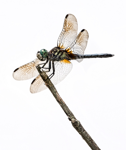 WEB Studio Look Blue Dasher