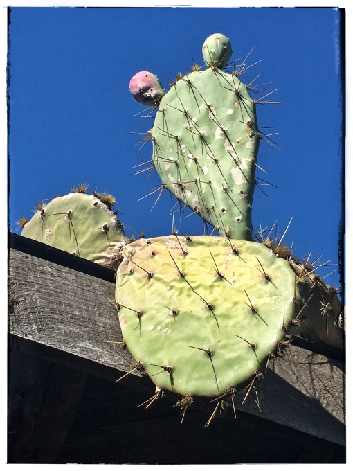 Roof Cactus hirez.jpg