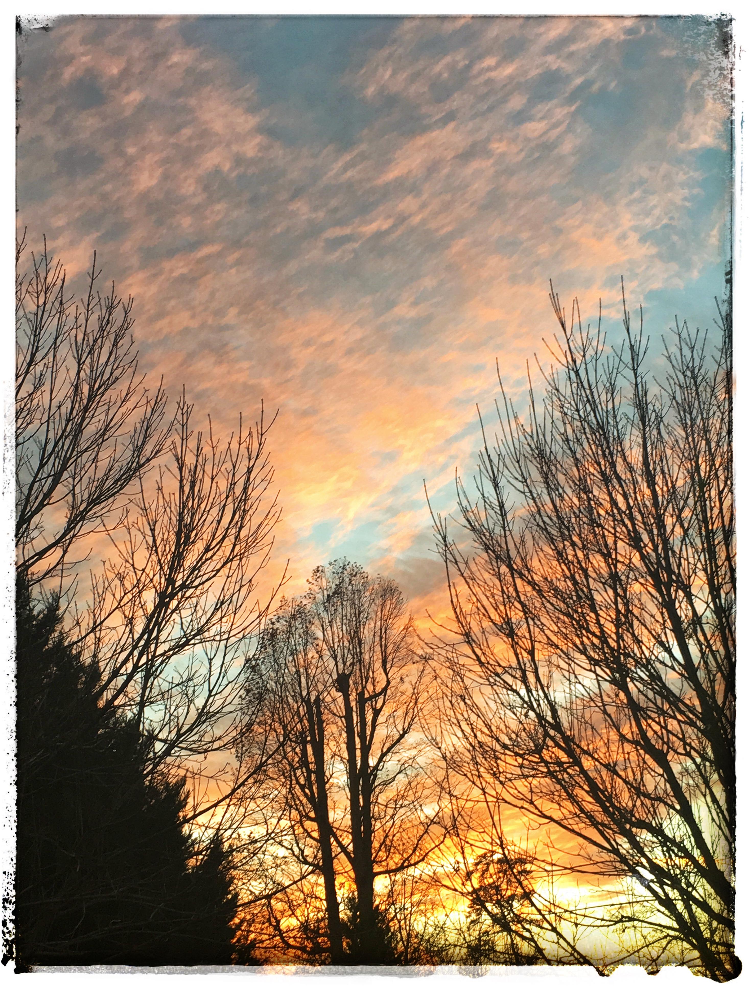 Trees & Sunset hirez.jpg