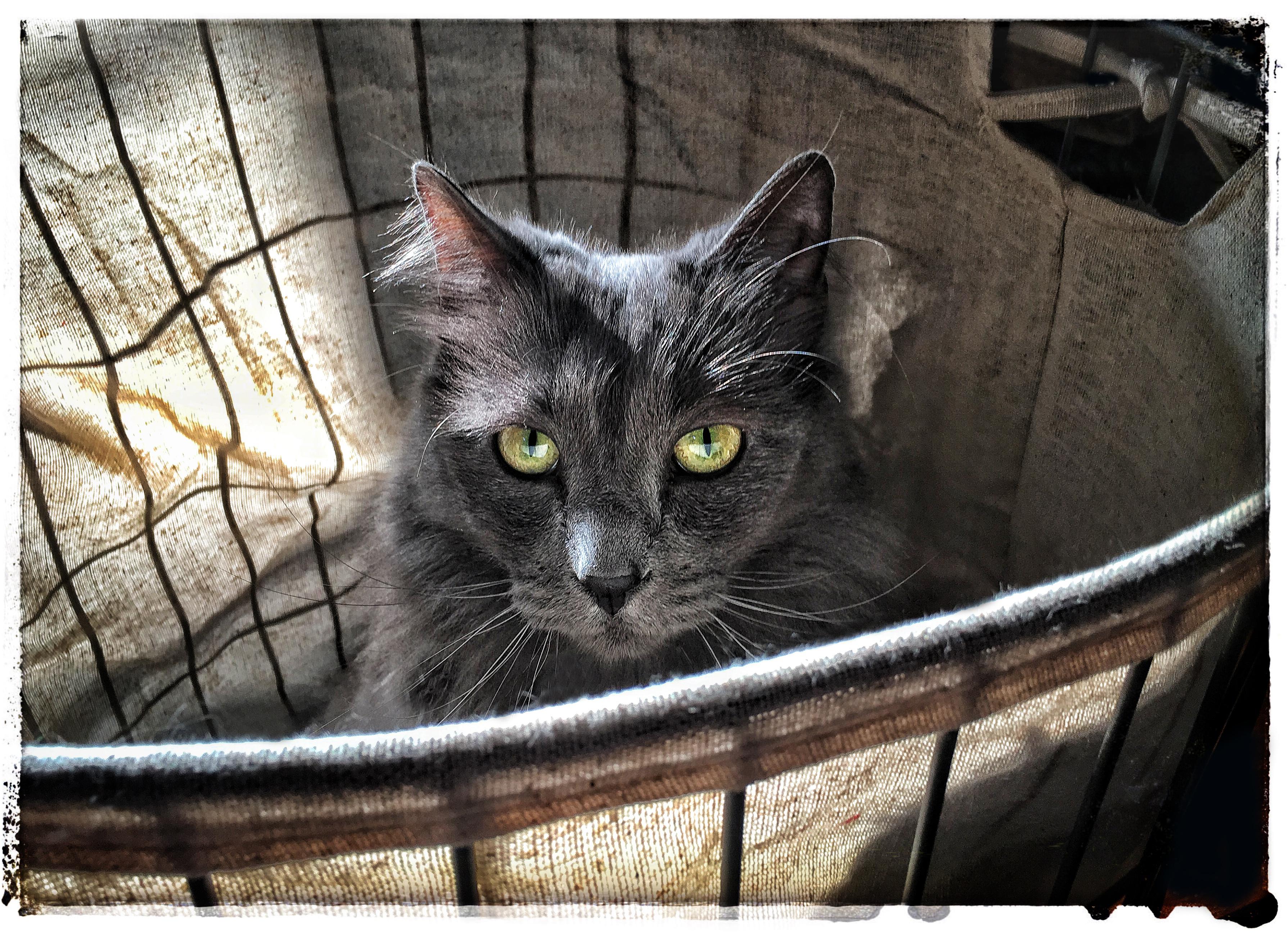 Lobo Closer up in basket