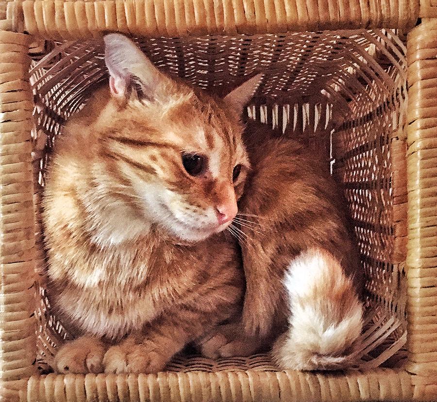 Queso Basket 1 lorez