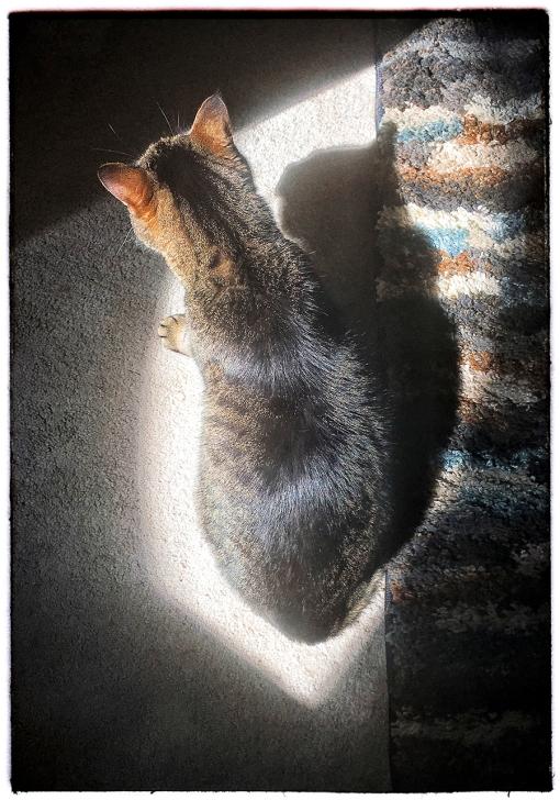 WEB Sunbeam Pixel