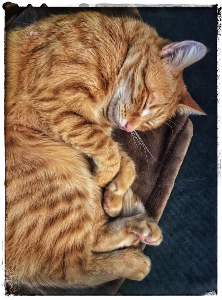 • Queso Sleeping