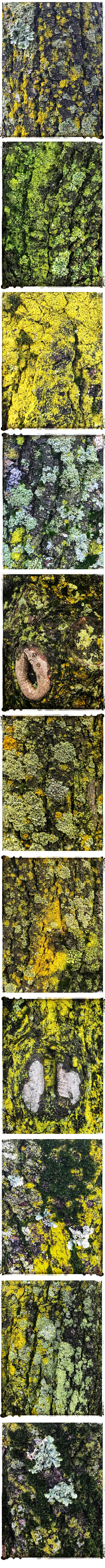 Lichen Moss Collage