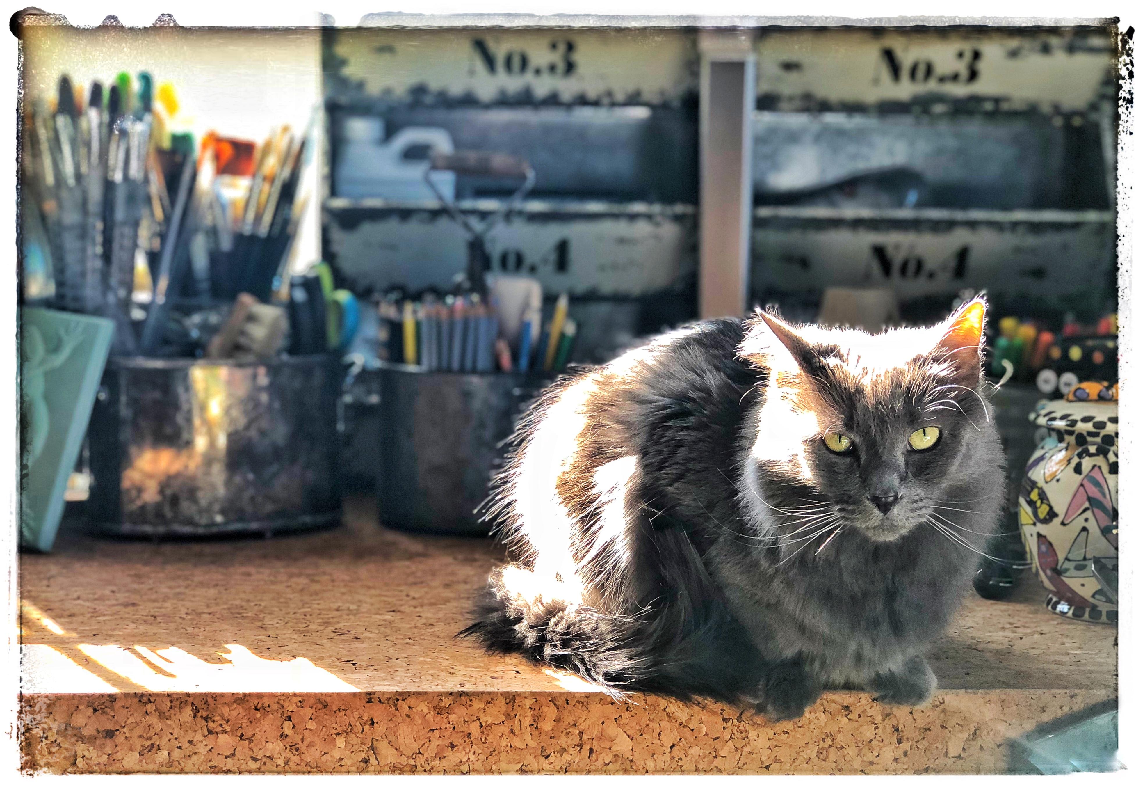 lobo on paint table